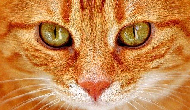 Ładne kotki